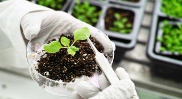 prova efficacia fitofarmaci
